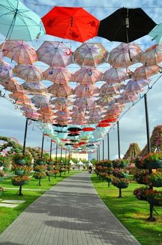 Umbrella in the garden Umbrella Street, Umbrella Art, Under My Umbrella, Travel Pictures, Cool Pictures, Street Art, Umbrellas Parasols, Singing In The Rain, Flower Girl Gifts