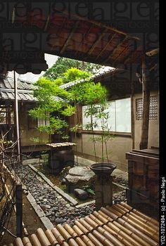 Japan, Kyoto, Myoshinji Temple, small #garden tsuboniwa bamboo - I would love a Japanese courtyard!