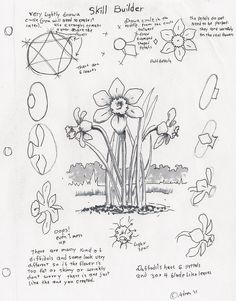 Lesson Plans: How to Draw a Daffodil, a Skill Builder For The Young Artist.Art Lesson Plans: How to Draw a Daffodil, a Skill Builder For The Young Artist. 3d Drawings, Doodle Drawings, Doodle Art, Pencil Drawings, Flower Drawings, Zen Doodle, Flower Drawing Tutorials, Art Tutorials, Plant Drawing