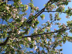 Tree top.  Photo: Sonja Hovmand Steffensen