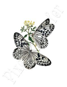 Digitally printed cotton fabric panel for your creative work (sewing, patchwork, framing, collage. Vintage Butterfly Tattoo, Butterfly Images, Fabric Panel Quilts, Fabric Panels, Butterfly Quilt, How To Make Purses, Decoupage Vintage, Beautiful Butterflies, Botanical Illustration