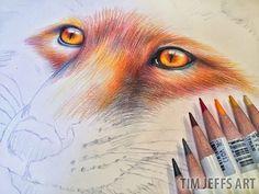 Red fox illustration by @timjeffsart using @tombowusa Irojiten Colored Pencils
