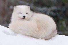 개드립 - 북극에 사는 멍뭉이 : 08239e747e4ca1f2c74306a6c24d1aff.jpg