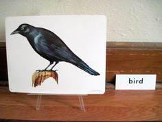 1960s BLACK CROW Illustration Poster - vintage extra large educational flash card art, ready to frame - Raven, Jackdaw, Bird, $16.00