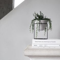 Plant Minimalism