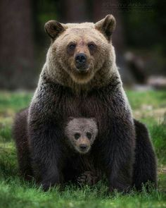 """beautiful-wildlife: """"Family Portrait by © Dmitry Arkhipov """" - Tiere - Chien Nature Animals, Animals And Pets, Wildlife Nature, Strange Animals, Cute Baby Animals, Funny Animals, Baby Pandas, Photo Animaliere, Interesting Animals"""