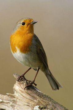 Beautiful yellow bird, photo by Julian Sawyer. Kinds Of Birds, All Birds, Little Birds, Love Birds, Pretty Birds, Beautiful Birds, Animals Beautiful, Cute Animals, Simply Beautiful