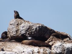 Seals in Mossel Bay Provinces Of South Africa, My Land, Cape Town, Seals, Small Towns, Around The Worlds, African, Places, Sweet