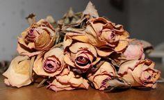 La vie est une fleur, et le temps son fléau. Nul ne peut lutter et quand le temps est venu la mort l'enlève.