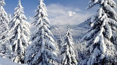 winter backround - Full HD Backgrounds - winter category
