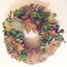 A living wreath, so cool! Succulent wreath with colored succulent cuttings ,Hanging succulent wreath