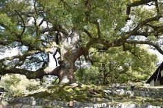 Shoren-in Temple (Shoren-in Monzeki) (Kyoto, Japan): Hours, Address, Religious Site Reviews - TripAdvisor