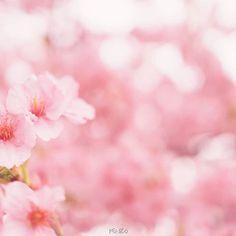 【penizo_photo】さんのInstagramをピンしています。 《去年の河津桜♪うちの会社、本社工場は2人で回してるんですが、この時2人で有休取って撮りに良ったんだよな(笑) 今年はもっと大人数で桜撮りに行きたいなー!休み併せてみんなで行きましょ♪  #桜 #河津桜 #春 #玉ボケ写真部 #bokeh #cherryblossom #カメラ好きな人と繋がりたい  #写真を撮ってる人と繋がりたい  #写真が好きな人と繋がりたい  #ファインダー越しの私の世界  #東京カメラ部  #IGersJP #Far_EastPhotoGraphy #pics_jp #as_archive #jp_gallery  #ptk_japan  #superb_flowers #whim_fluffy #wp_flower #phx_flowers #rainbow_petals #Petal_Perfection #ip_connect #insta_pick_blossoms #tv_flowers #bns_flowers #Favv_flowers #eye_spy_flora》