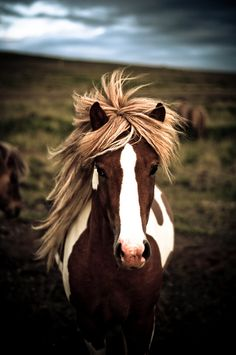 "This horse is rocking the ""wind-blown"" look."