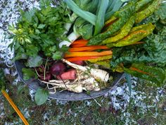 Twitter / Recent images by @Annabel Schubert Langbein. Vegetables harvested from my snowy Wanaka garden.