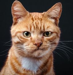 Now This is a REALLY Grumpy Cat http://www.robbahou.com/gallery/catsdogs