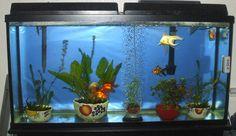 bare bottom goldfish aquarium - Google Search