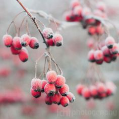 Nature Photography Frosty morning  Size 8x8 by idniphotography, $18.00