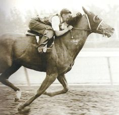 1946 Triple Crown winner and Horse of the Year, Assault Quarter Horses, Pretty Horses, Beautiful Horses, The Belmont Stakes, Triple Crown Winners, Horse Silhouette, E Mc2, Thoroughbred Horse, Racehorse