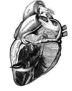 Artistic & creative illustration of the heart. In the heart is a forest scene with bird. Also, a hand about to shake the hand of another. Most interestingly is a woman sleeping bear the center if the heart. Creative Illustration, Illustration Art, Illustrations, Geniale Tattoos, 1 Tattoo, Tattoo Drawings, Desenho Tattoo, Anatomical Heart, Anatomy Art