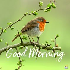 Pictures for everyone: GOOD MORNING You are in the right place about jungkook GIF Here we offer you the most beautiful pictures about the GIF flores you are looking for. When you examine the Pictures Good Morning Friends Quotes, Morning Quotes Images, Good Morning Images Hd, Good Morning Picture, Good Morning Messages, Good Morning Greetings, Good Morning Good Night, Morning Pictures, Good Morning Wishes