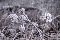 Kiss of frost Showcase your work, discover amazing photos, and stay inspired. Amazing Photos, Cool Photos, Frost, Kiss, Hair Cuts, Inspired, Nature, Flowers, Inspiration