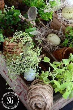HOW TO ADD SEASONAL DECOR TO YOUR HOME-indoor herb garden-stonegableblog.com