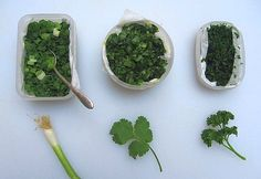 Freezing instructions for cilantro, parsley and green onions.