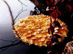 Earthy-nature-art Walter Mason
