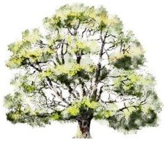Watercolor-Rendering-trees-004BB.jpg (1024×885)