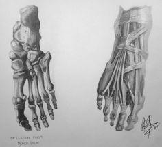 Human Anatomy - Foot by HaloGoddess1.deviantart.com on @deviantART