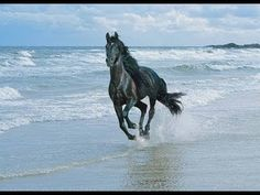 ♥ Top 10 Most Beautiful Horse Breeds -- Just for you ♫ - YouTube