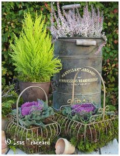 Container Garden: Remember, ornamental kale and cabbages are EDIBLE | kitchen garden | jardin potager | bauerngarten