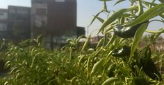 Urban agriculture gives Knoxville green thumb