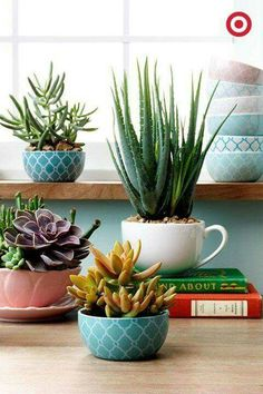 Superb Inspiration Of The Day: 17 Pleasant Tea Cup Garden That You Could Do It  Yourself   Top Inspirations