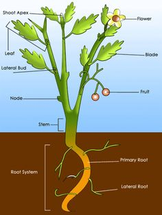1000 images about growing on pinterest plant life for Different parts of soil