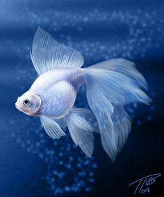 White Goldfish by DragonosX.deviantart.com on @deviantART