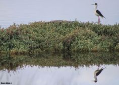 Mauro Hilário posted a photo:  Reflected memmories from a Greek Salt Marsh