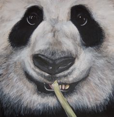 Panda Acrylic Painting by laurawelch12 on Etsy, $300.00 >>  Beautiful close up painting of a Panda!