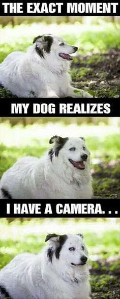 THIS is SOOO!!! Everytime I try to take her picture. Silly old dog. ;)