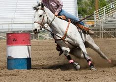 Head Tack Mechanics - TheHorse.com | Bridles, reins, and martingales server a variety of biomechanic functions. Learn more on TheHorse.com! #horses #horsehealth #ridinghorses