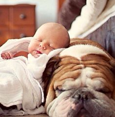 Cute babies and dogs