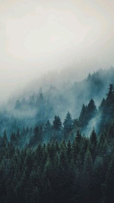 Image Beautiful, Beautiful World, Beautiful Places, Beautiful Pictures, Landscape Photography, Nature Photography, Photography Women, Travel Photography, Misty Forest