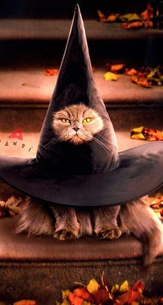 witchy cat....