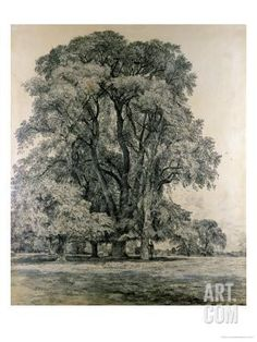 Elm trees in Old Hall Park, East Bergholt (Drawing) by John Constable, (made). Drawing, 'Elm Trees in Old Hall park, East Bergholt' by Constable. Art Prints, Landscape Paintings, Nature, Fine Art America, Painting, Tree Drawing, Park Art, Landscape Art, Landscape Drawings