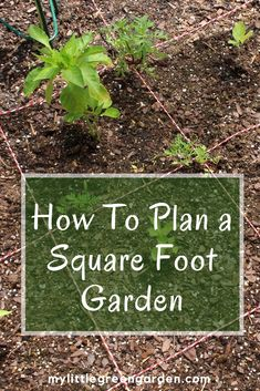 To Plan a Square Foot Garden Learn how to plan a square foot garden to help increase your harvest. This method pairs well with raised beds.Learn how to plan a square foot garden to help increase your harvest. This method pairs well with raised beds. Building A Raised Garden, Raised Garden Beds, Raised Beds, Raised Gardens, Raised Bed Garden Layout, Raised House, Garden Layouts, Vegetable Garden Planner, Vegetable Gardening