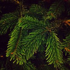 #100happydays day 57. De geur van een kerstboom in huis ...