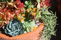 Check out this great blog called Life on the Balcony - all about contained gardening and growing plants in small spaces!  You're sure to find lots of ways to green up your apartment here.