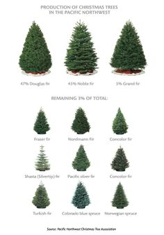 Northwest Christmas tree types