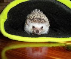 I recently became the proud mother of a baby hedgehog. Wanting to spoil him something awful, I decided that he needed the nicest, coziest snuggle bag in existence. I knew ...